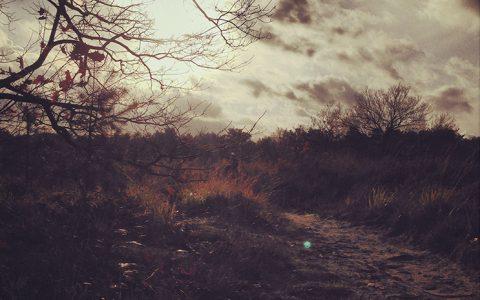 fotografie_landschap