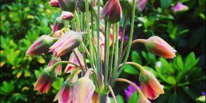 fotografie_natuur