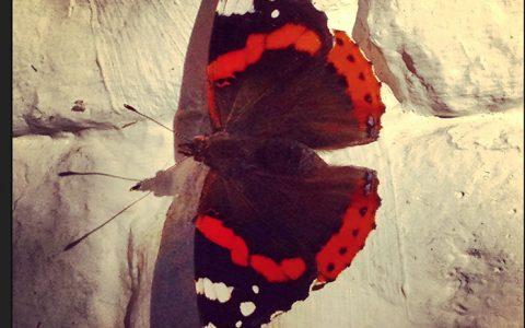 fotografie_vlinder